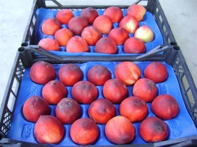 خرید شانه میوه