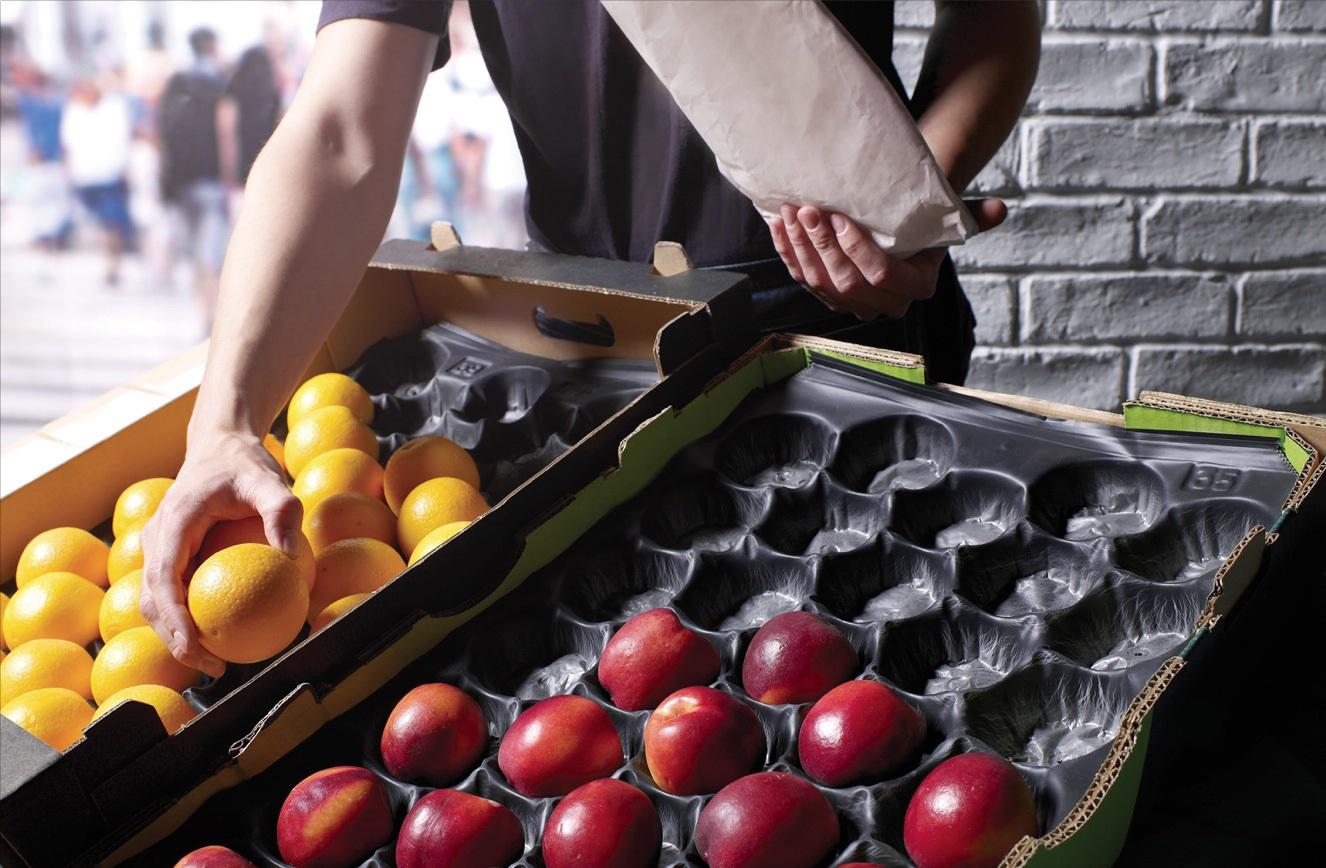 قیمت خرید انواع شانه میوه